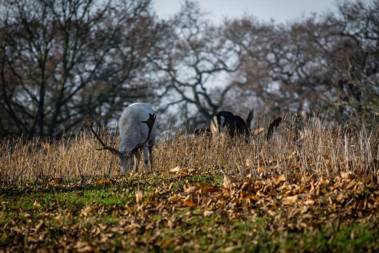 Birds on field against trees
