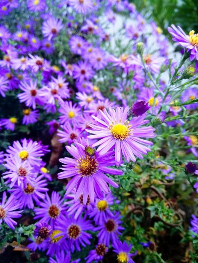Beauty In Nature Day Flower Flower Head Fragility Freshness Nature Outdoors Purple Vulnerability