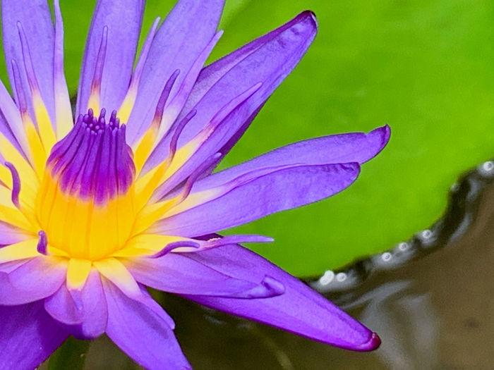 Close-up of wet purple flowering plant