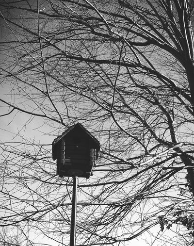 Birdhouse Trees