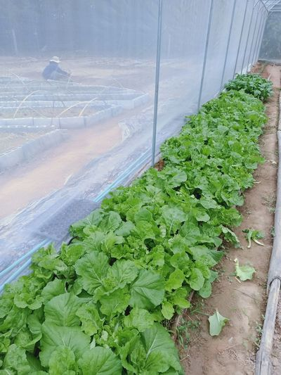 High angle view of plants growing in container