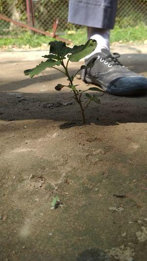 Professional Leaves Nature Photographer 200 Likes DSLR Photos