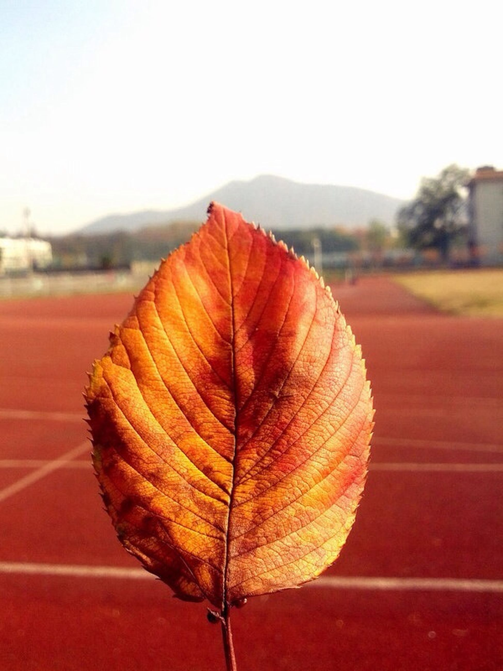 leaf vein, close-up, natural pattern, focus on foreground, leaf, fragility, nature, dry, beauty in nature, tranquility, outdoors, single object, no people, red, pattern, day, clear sky, stem, autumn, season