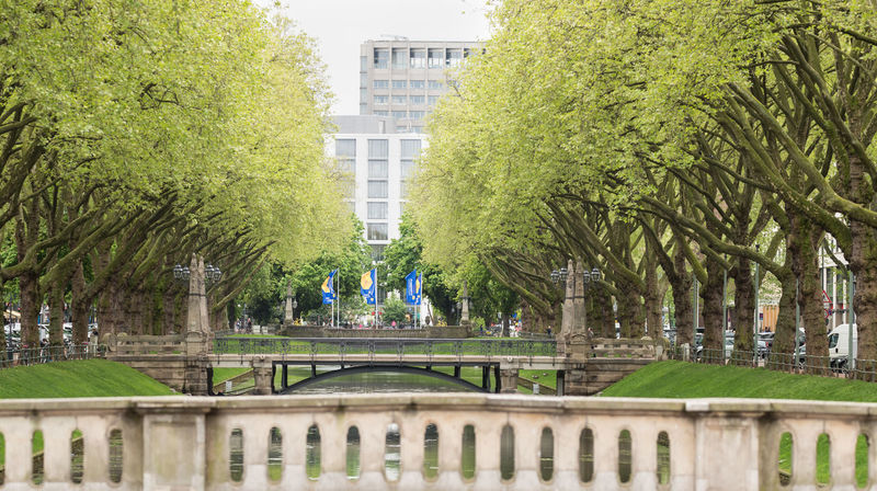 DUESSELDORF, GERMANY - MAY 03, 2017: The little river Düssel flows along the famous Königsallee and invites for a relaxing walk under old trees Beaty In Nature Cityscape Düsseldorf Famous Germany High Resolution Königsallee Luxury Panorama Shopping Travel Estina Tree