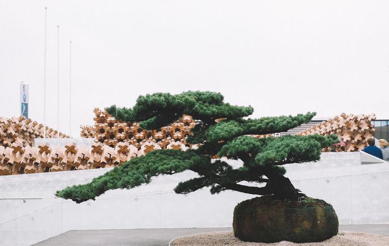 Bonsai Bonsai Bonsai Tree Expo Expo 2015 Expo Milano 2015 Expo2015 Expo2015milano Fuji X100s FUJIFILM X100S Green Japan Pavilion Japanese  Milano Expo 2015 Religion Tree X100S