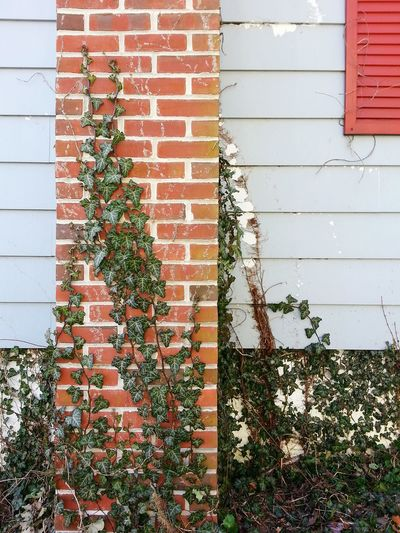 Old Chimney Ivy Blue Grey Red Brick Plants Relaxing Taking Photos Check This Out Enjoying Life No People February 2015 Showcase: February
