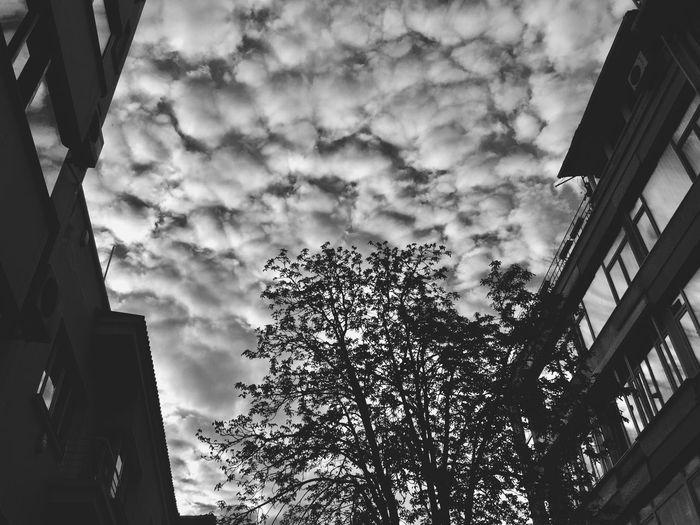 Sky Cloud - Sky Streetphotography No People Tree