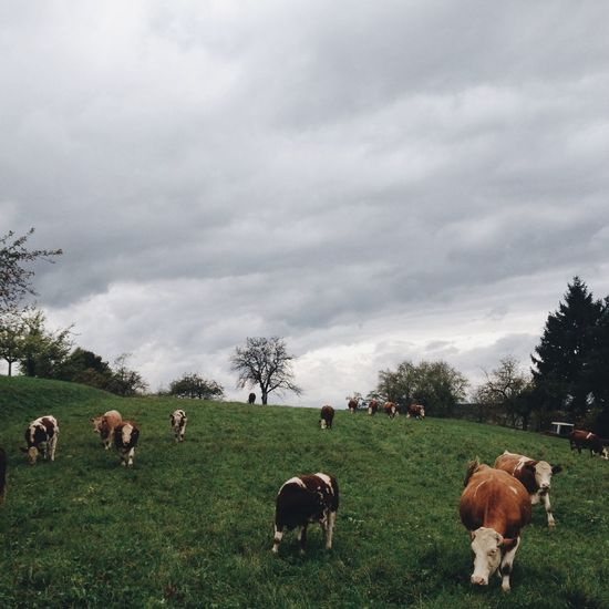 Nature Animals The Calmness Within Vscocam