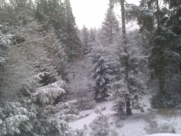 Winter Snow Fir Trees Ice Cold Wonderland Trees Nordic Frost Frosty Crisp Skiing Ski Wilderness North Exposed Survival Eskimo Atmospheric Outdoors Nature Clean Natural Wildlife & Nature Pinetrees