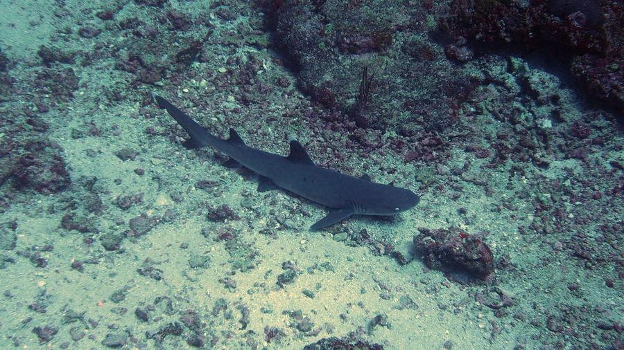 White tip shark laying on the sea floor Animal Fish Gili Islands Gili Trawangan Outdoors Sea Life Shark Underwater