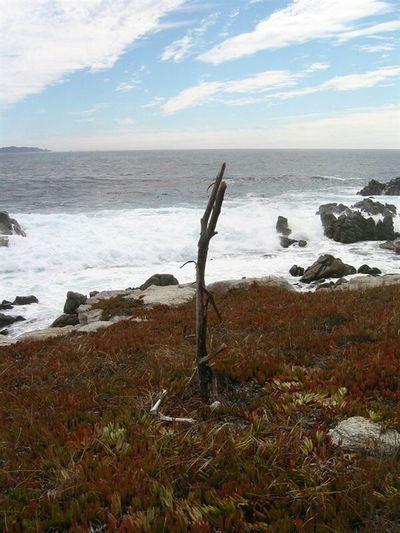Pebble Beach California Oceanside Abstract Seascape
