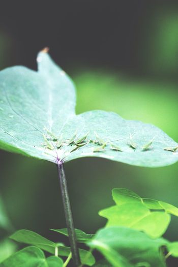 Leaf Close-up Nature Day Fragility Focus On Foreground Beauty In Nature Growth Outdoors Green Color One Animal Plant Insect No People Animal Themes Freshness