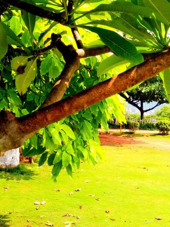 Under the green wood tree. Green Color Outdoors Day Nature Tree Landscape Beauty In Nature EyeEm Selects EyeEmNewHere