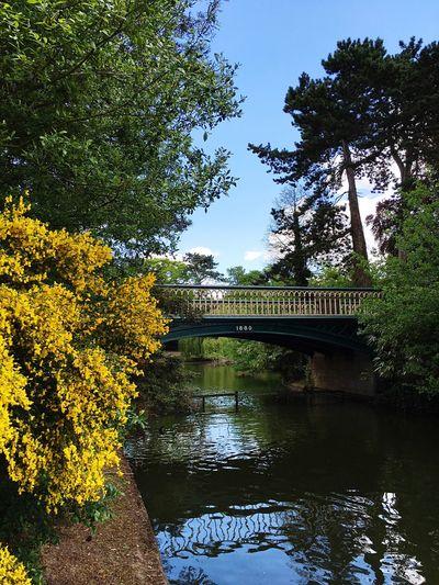 Bridge Park