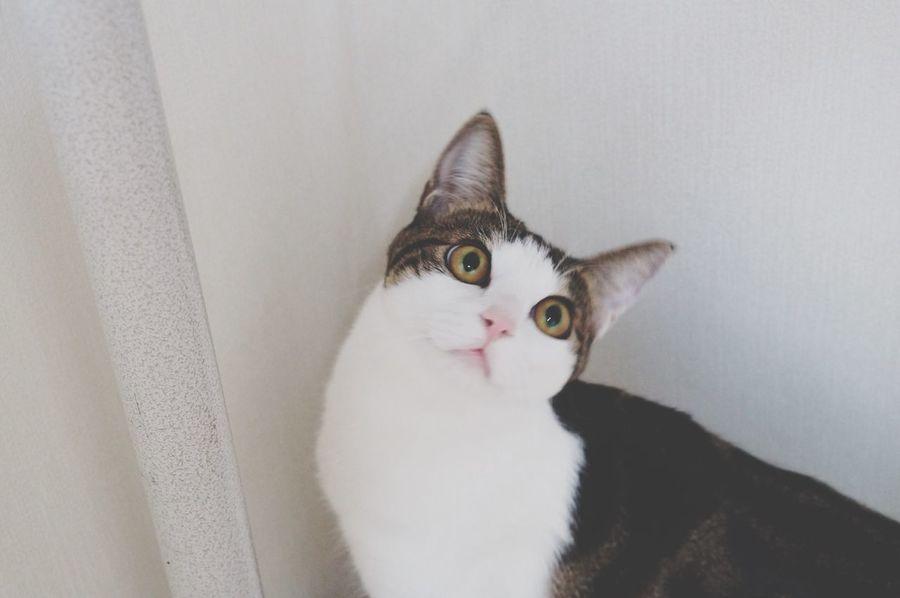 Yomi Yomi Cat