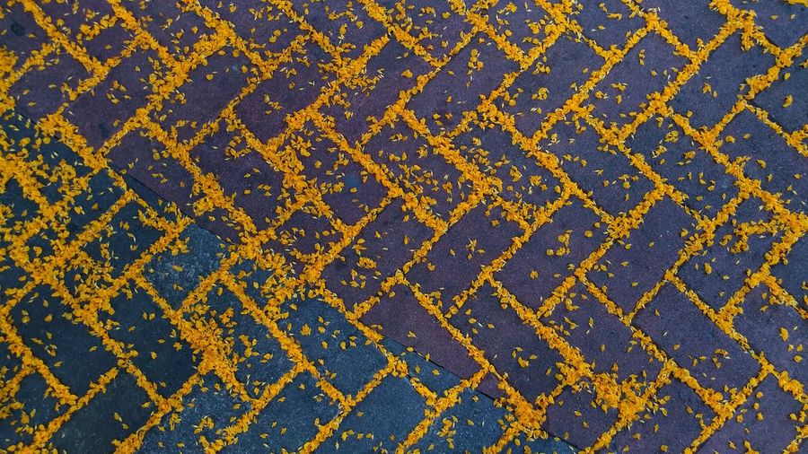 Patterns In Nature EyeEm Best Shots EyeEm Selects EyeEm Gallery EyeEm Flower Head Nature Eyeem Philippines Nature Photography Falling Flowers Yellow Flowers Fall Brick Tiles Backgrounds Blue Full Frame Yellow Pattern Textured  Gold Colored Close-up Seamless Pattern