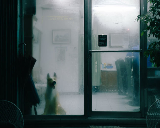 View of dog sitting behind glass indoors