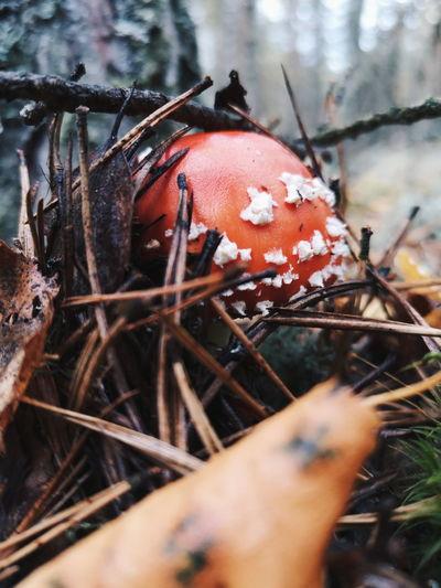 Autumn EyeEm