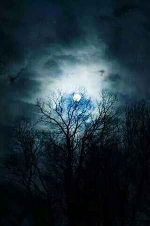 Popular Fotos Getting Inspired Paradise Exploring Forest In The Forest Moon Moonlight In The Night