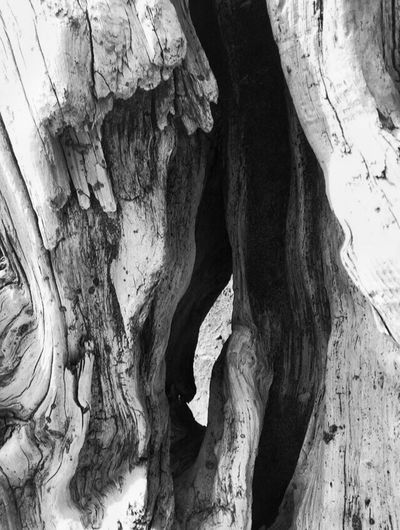 Textures And Surfaces Abstract Nature Beach Photography Driftwood Texture Beach Still Life Black And White Abstractions Shapes In Nature  Patterns & Textures What Do You See? Views Perspective Faces In Places I See Faces Oregon Coast Earth Porn Landscape #Nature #photography Nature Nature Photography