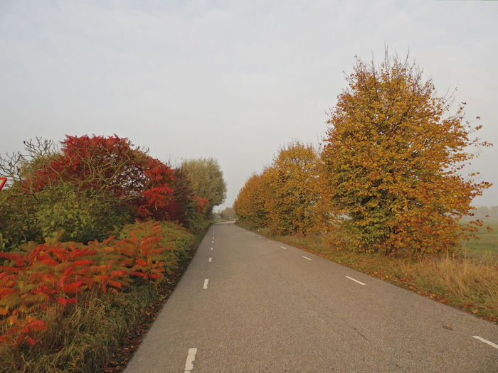 Road To Winter Autumn Colors Best EyeEm Shot Enjoying Photography Best Of EyeEm Dutch Countryside Bestnatureshot Forrestautmun Colors Autumn🍁🍁🍁 Nature_collection Collorfull Beauty In Nature Collors Of Holland Vibrant Color Enjoying The Moment Photo Of The Day Sky Flower Outdoors Freshness The Way Forward Colors Of Autumn Best Shots EyeEm Popular Photographs Popular Photo EyeEm Diversity The Street Photographer - 2017 EyeEm Awards