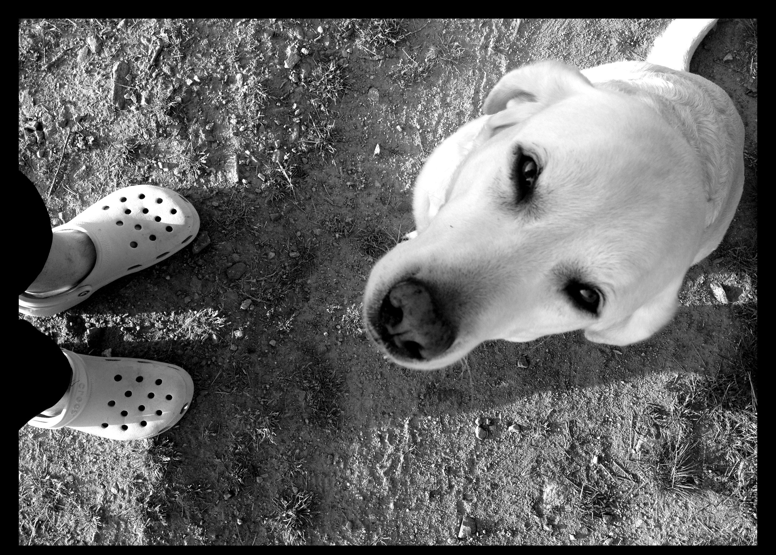 transfer print, auto post production filter, dog, low section, pets, lifestyles, person, leisure activity, childhood, high angle view, standing, shoe, domestic animals, playing, playful, day, close-up