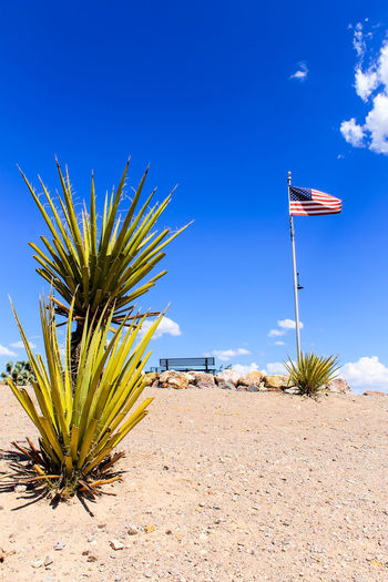 Flag Waving in desert park Sky Nature Day No People Outdoors Blue Flag Patriotism Plant Land Growth Sunlight Beauty In Nature Tranquil Scene Tranquility National Icon Cactus