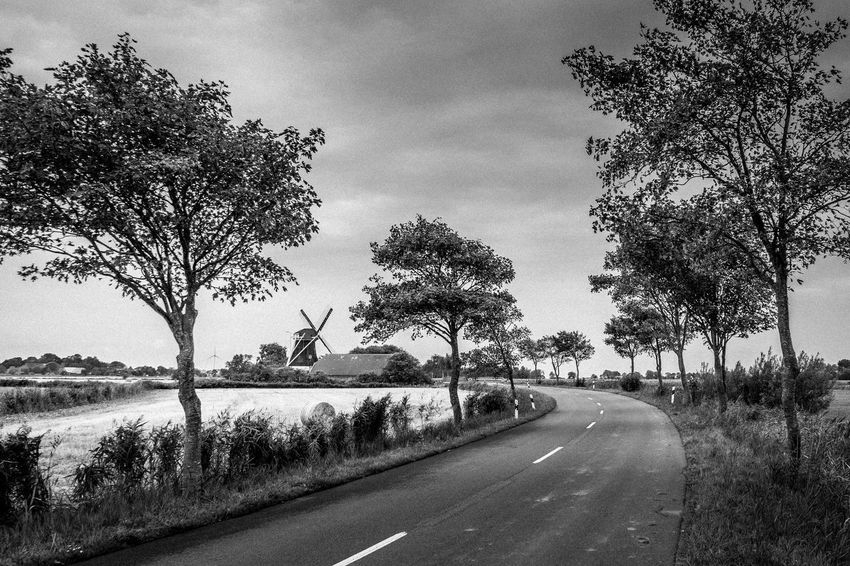 Tree Road Plant Transportation Sky Direction The Way Forward Nature Sign No People Cloud - Sky Day Symbol Street Road Marking Outdoors Marking Landscape Tranquility Land Diminishing Perspective Dividing Line