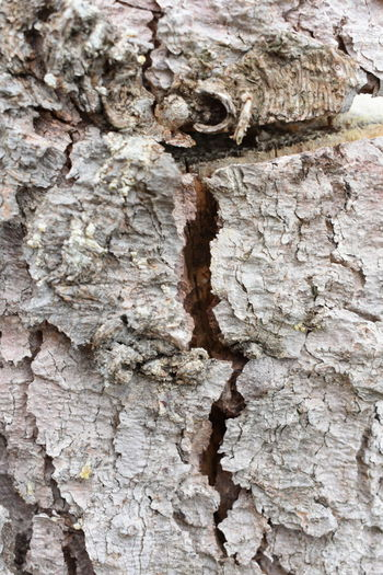 Beautiful Nature Tree Trunk Backgrounds Bark Beauty In Nature Brown Close-up Cute Cuted Tree Day Forest Full Frame Grain Grey Macro Natural Pattern Nature No People Outdoors Pattern Plant Plant Bark Rings Rough Structure Textured  Textured Effect Tree Tree Trunk Trunk Weathered Wood - Material