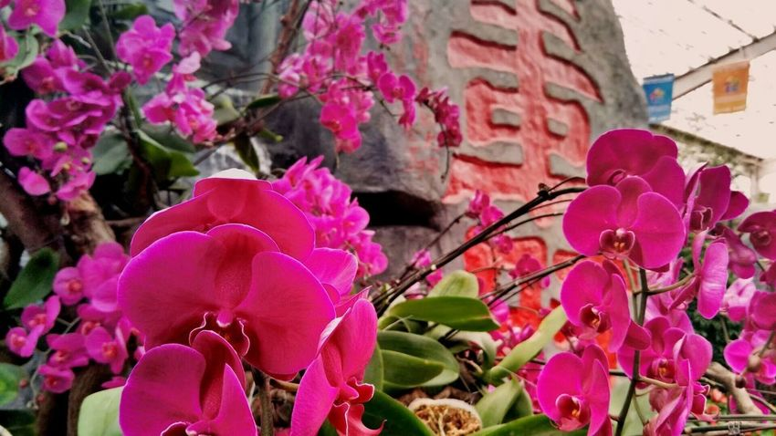 Flower Pink Color Plant Growth Nature Fragility No People Outdoors Petal Beauty In Nature Flower Head Day Springtime Freshness Close-up