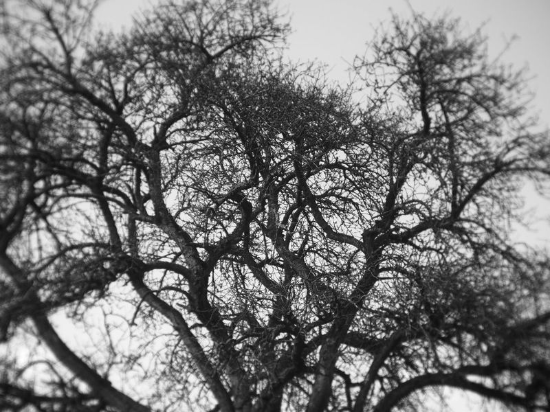 branches of a tree (Holga lens) Black & White Holga Holga Photography Holga Lens Nature Nature Photography Tree Backgrounds Bare Tree Beauty In Nature Black And White Blackandwhite Blackandwhite Photography Branch Day Grey Holgalens Low Angle View Nature Naturelovers No People Outdoors Sky Tranquility Tree