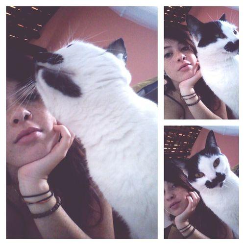 Cat Brazilian Lovely Pretty