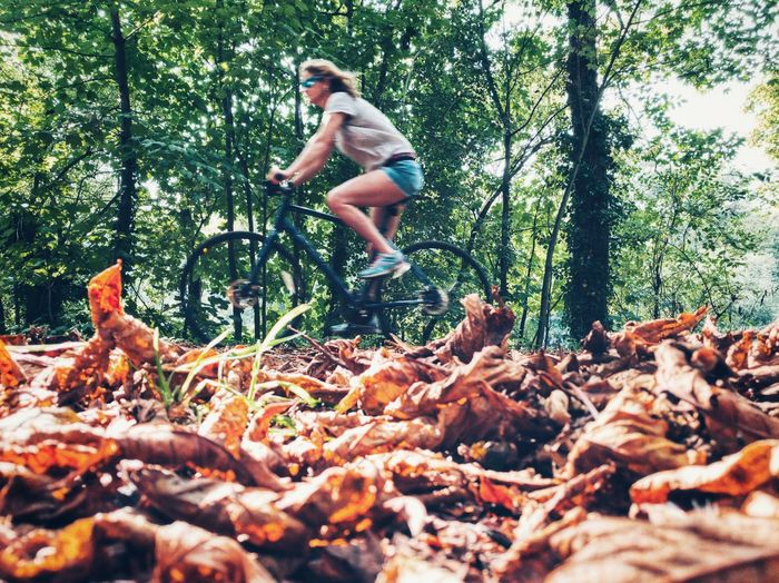 Surface Level View Of Dried Leaves Against Mature Woman Riding Bicycle In Forest