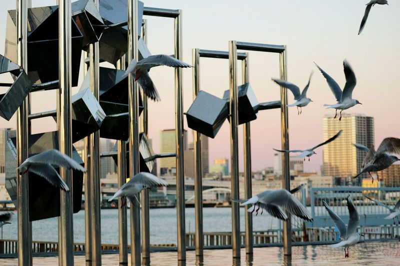 Seagulls flying by metallic structures at sea against city