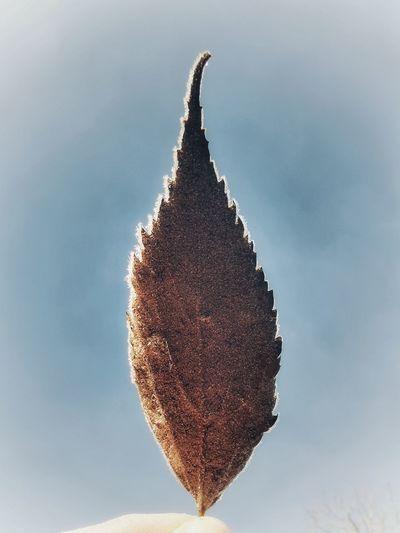 Cold leave Leaf Close-up Sky