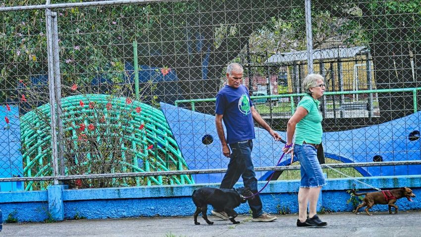 Perfect Match Capturing The Moment Green Costa Rica Walking The Dog Dog Walking San Jose, Costa Rica Turquoise Dog Flower Pet Woman Man Street Photography Playground playground equipment