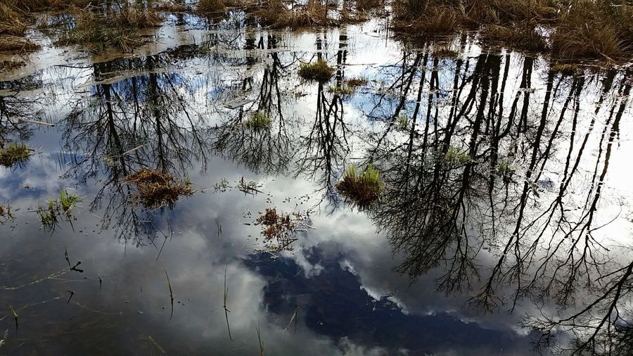 Water reflexion in my forest Nature Photography Naturelovers Pond Myforest Water Reflection Forest Blue Sky Natural Beauty Crazyclouds Crazysky Nature's Diversities Fine Art Photography