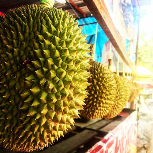 King EyeEmNewHere Exotic Exotic Fruits Durian Close-up No People Day Growth Freshness Spiked Plant Fruit