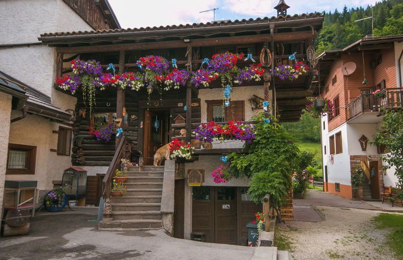 Traditional mountain house decorated with flowers in the center of Folgarida, Veneto Alpine Dolomites Dolomites, Italy Alps Architecture Building Building Exterior Built Structure City Dog Flower Flowering Plant Flowers Folgarida Garden House Nature Pet Residential District Street Traditional Veneto Village Window Window Box