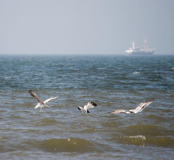 Flights Bird And Beach Bird And Beach Scape Gulls And Boat Nature Water
