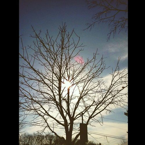 I love taking these morning walks under the pure sunlight, it's so calm, it's relaxing Sunlight Naked Trees Dead Silence