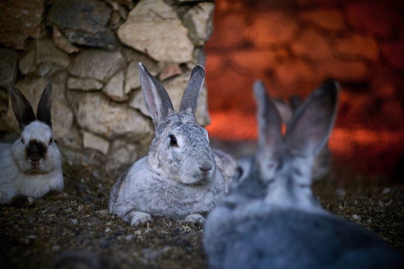 Close-up of rabbits at zoo
