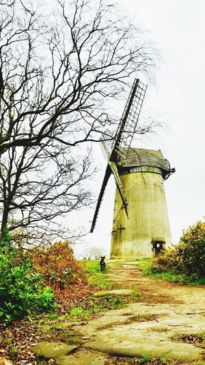 Windmill Outdoors Dog England Hilltop Autumn Bidston Hill Leaves Sandstone Wirral United Kingdom Dogwalk Tree Branches Scenic