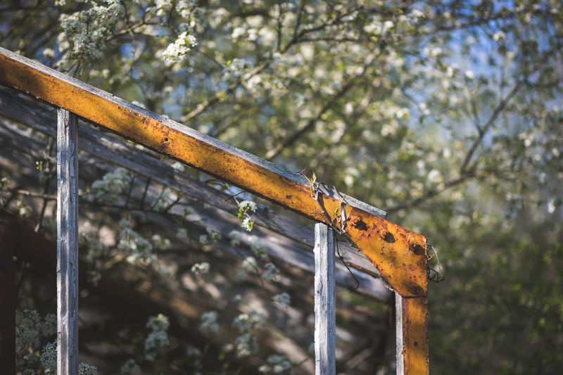 Low angle view of rusty metal fence against trees