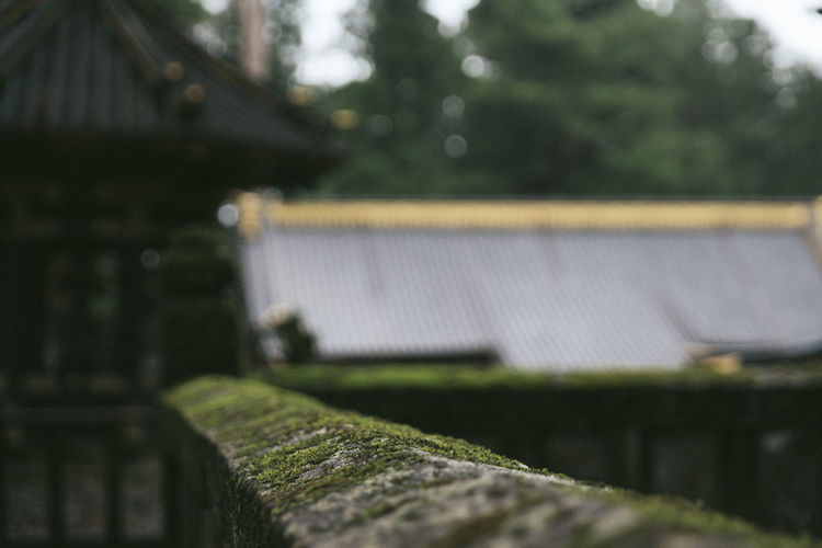 A mossy railing at Tosho-gu Temple in Nikko, Japan. Japan Japanese Temple Moss & Lichen Mossy Architecture Building Exterior Built Structure Close-up Day Focus On Foreground Green Color House Moss Nature No People Outdoors Plant Roof Roof Tile Selective Focus Temple Tree Water Wood - Material