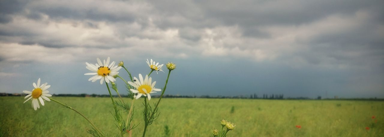 Flower Field Cloud - Sky Nature Beauty In Nature Wildflower Outdoors Springtime Landscape Shotononeplus Oneplusphotowalk Oneplusphotography Onepluslife Agriculture Close-up Nature Landscape
