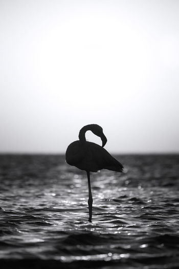 Silhouette bird in sea against clear sky