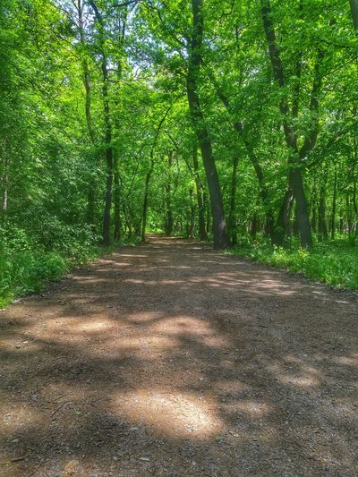 Forest Photography Forest Path Forest Peaceful Green Nature Huaweiphotography Huawei P9 Leica Park Sunnyday