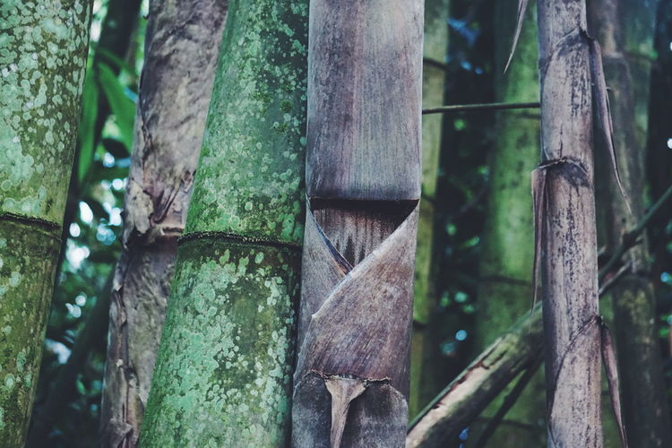 Bamboo Plant Tree Trunk Tree Trunk No People Growth Forest Focus On Foreground Nature Wood - Material Green Color Bamboo - Plant Close-up Bamboo Boundary Tranquility Outdoors