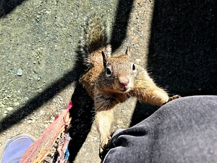 Squirrel EyeEm Selects Mammal Sunlight High Angle View One Animal Vertebrate Shadow Day Nature EyeEmNewHere